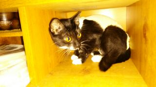 カナディアンロッキーで保護された猫「白玉」