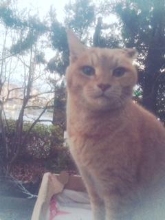 地域猫「チャトラン」