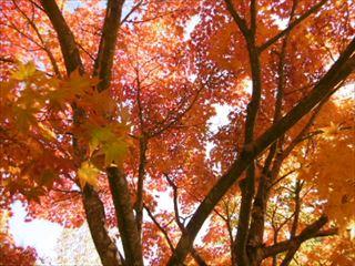 天高くウマ肥ゆる秋