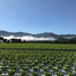 霧が晴れて行く 高原の朝